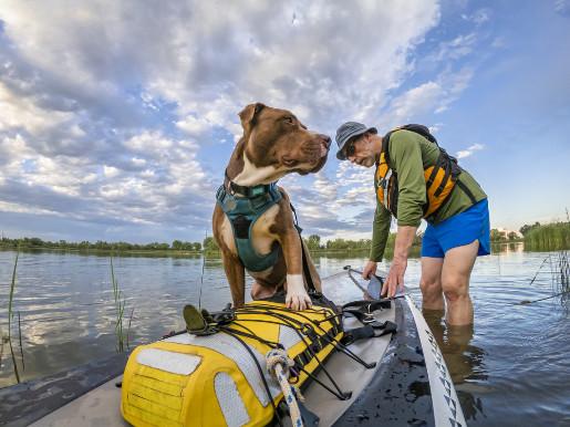 SUP Board Auswahl für Fahrten mit Hund